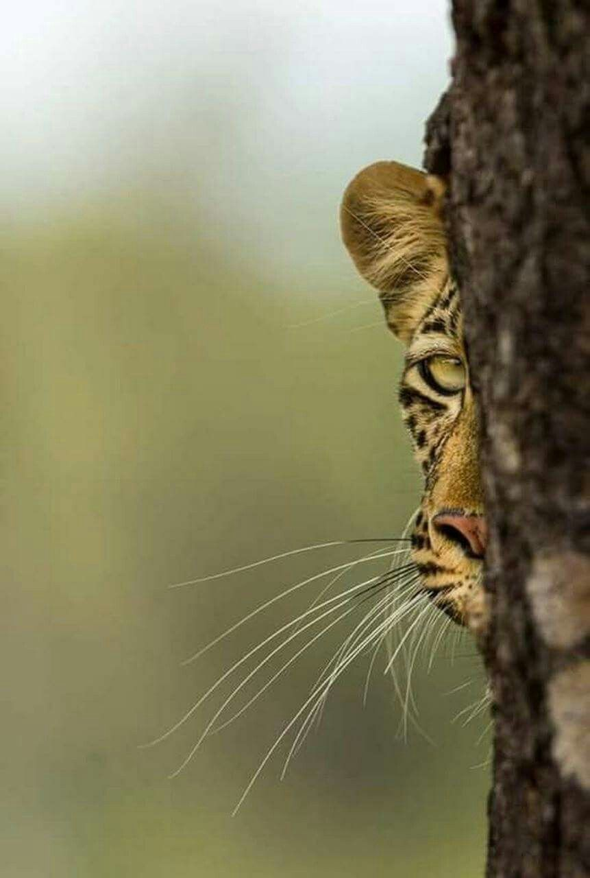 Pin by jermani on photography pinterest cats animals and