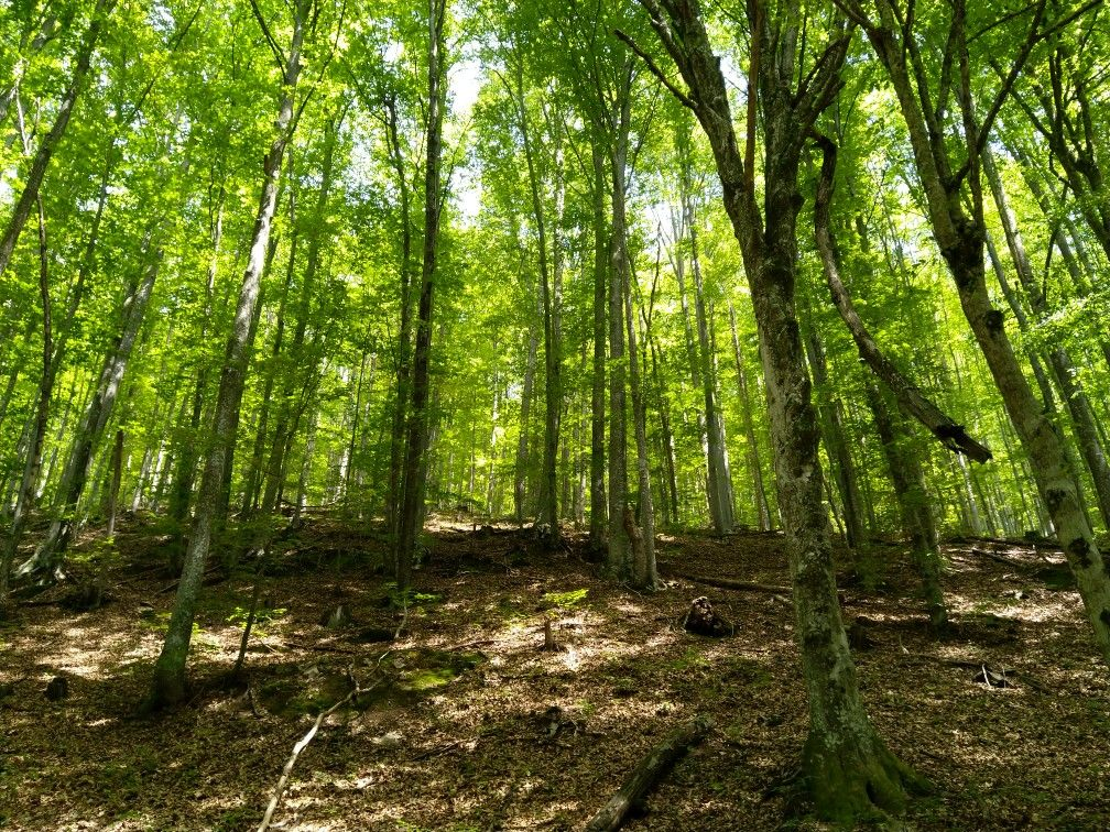 This Forest Is Magical And Has A Really Amazing Vibration