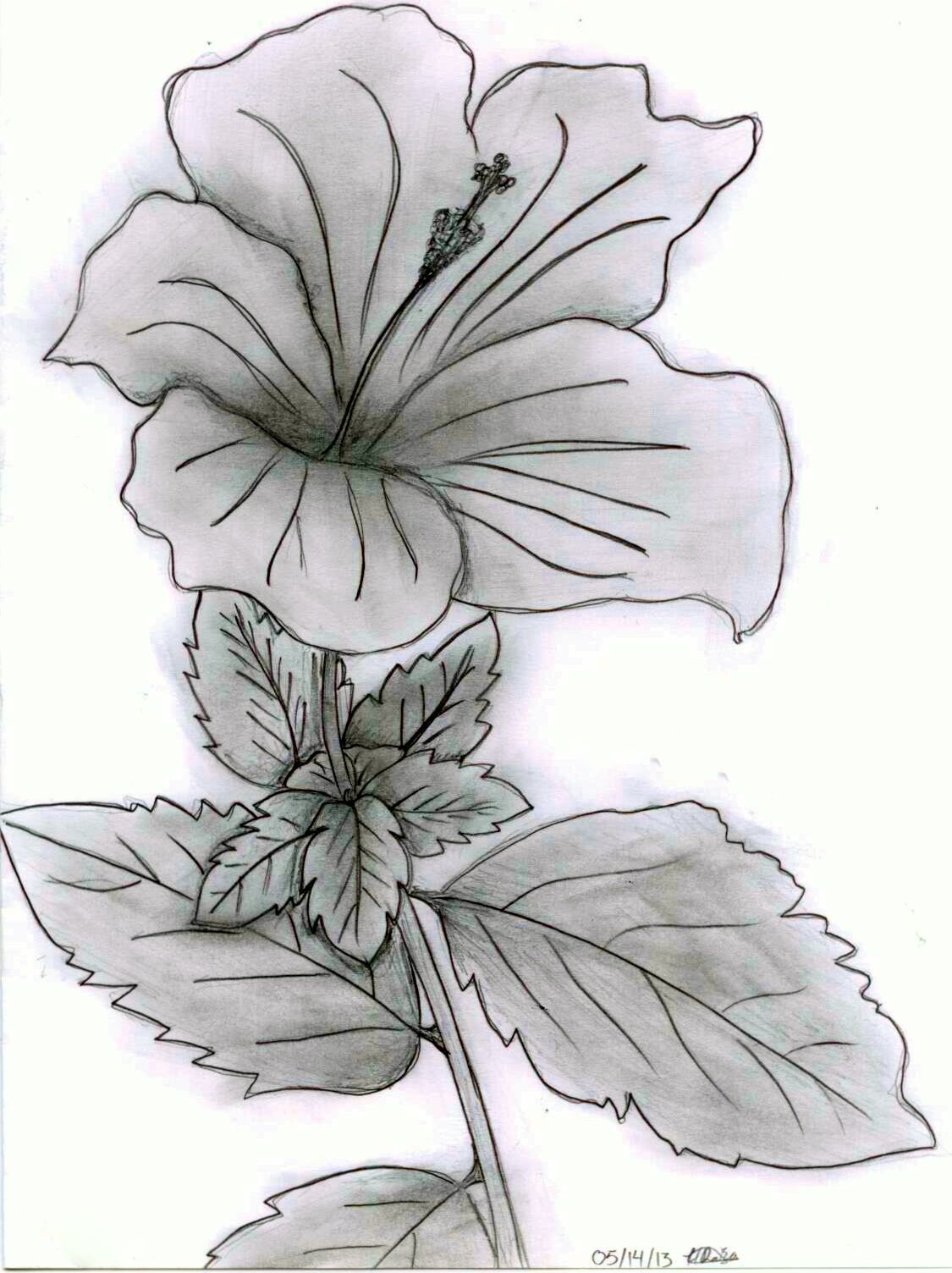 Hibiscus flower drawing craft ideas pinterest hibiscus flower hibiscus flower drawing izmirmasajfo
