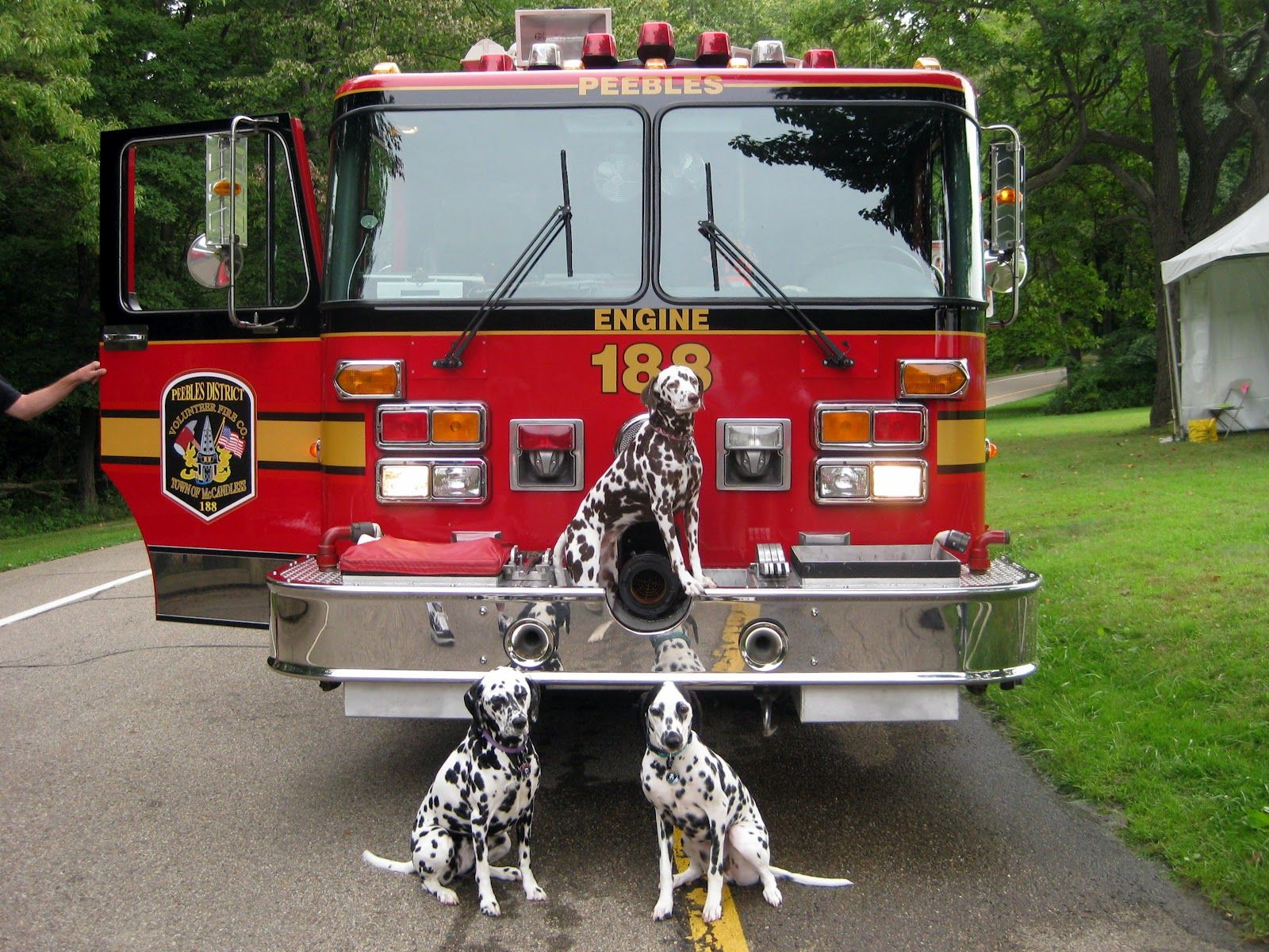 dalmatians and fire truck