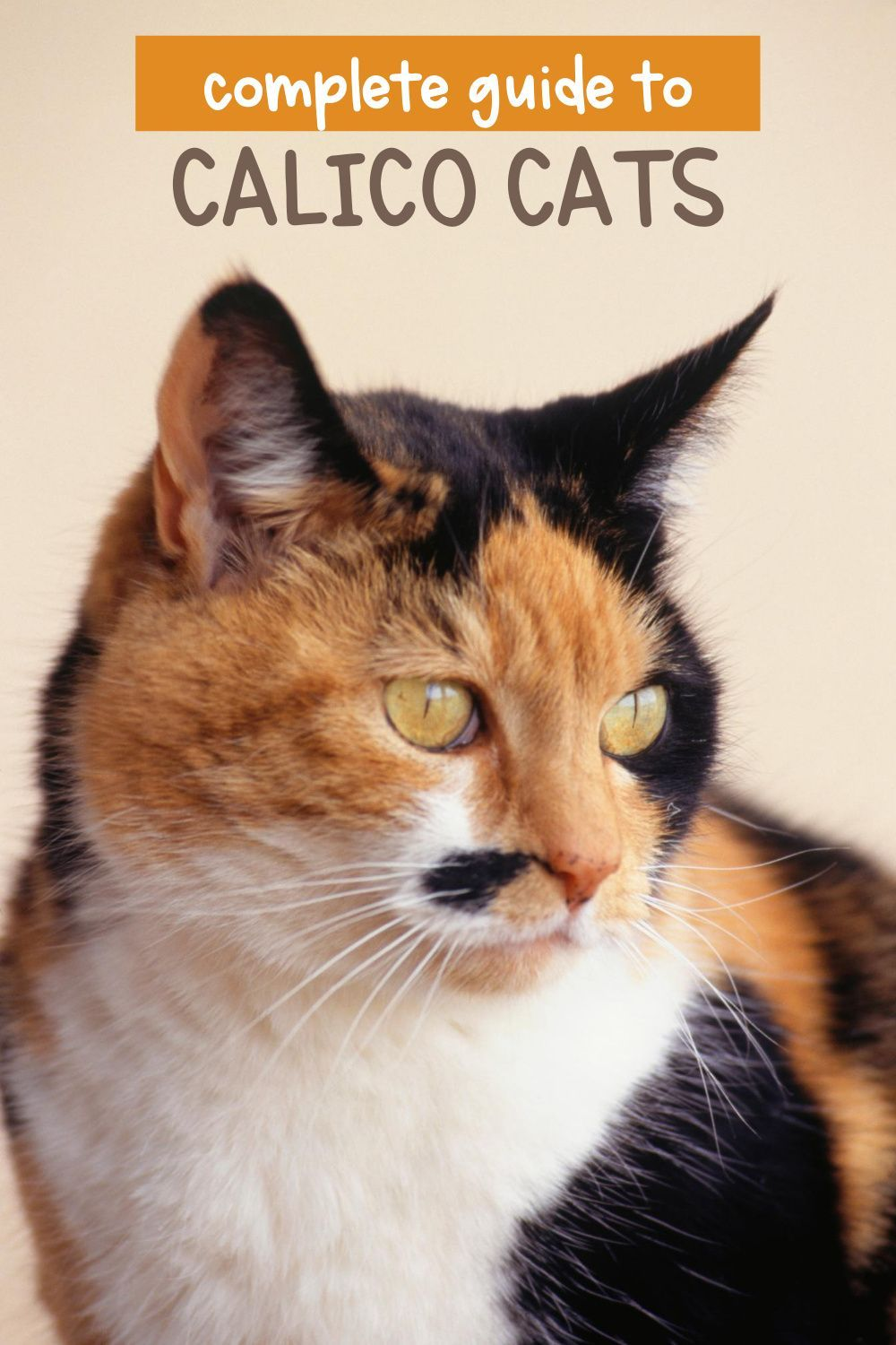 All About Calico Cats In 2020 Calico Cat Cats Cat Advice