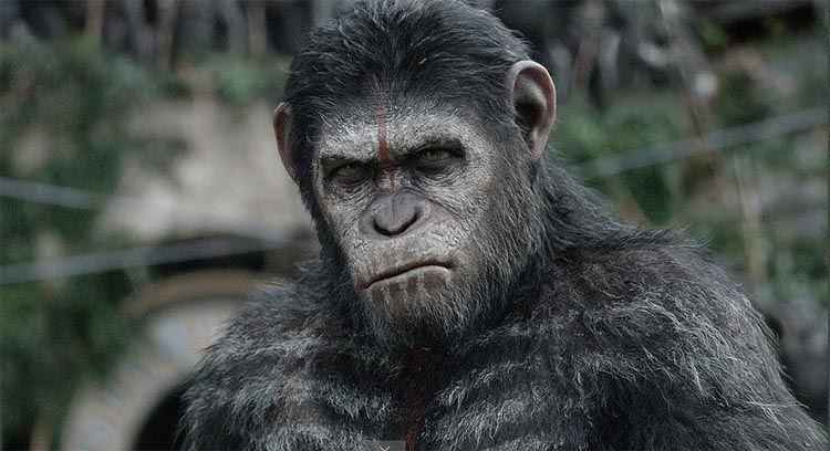 """G.H.: """"Planeta dos Macacos"""": saiba o que poderia ir além..."""