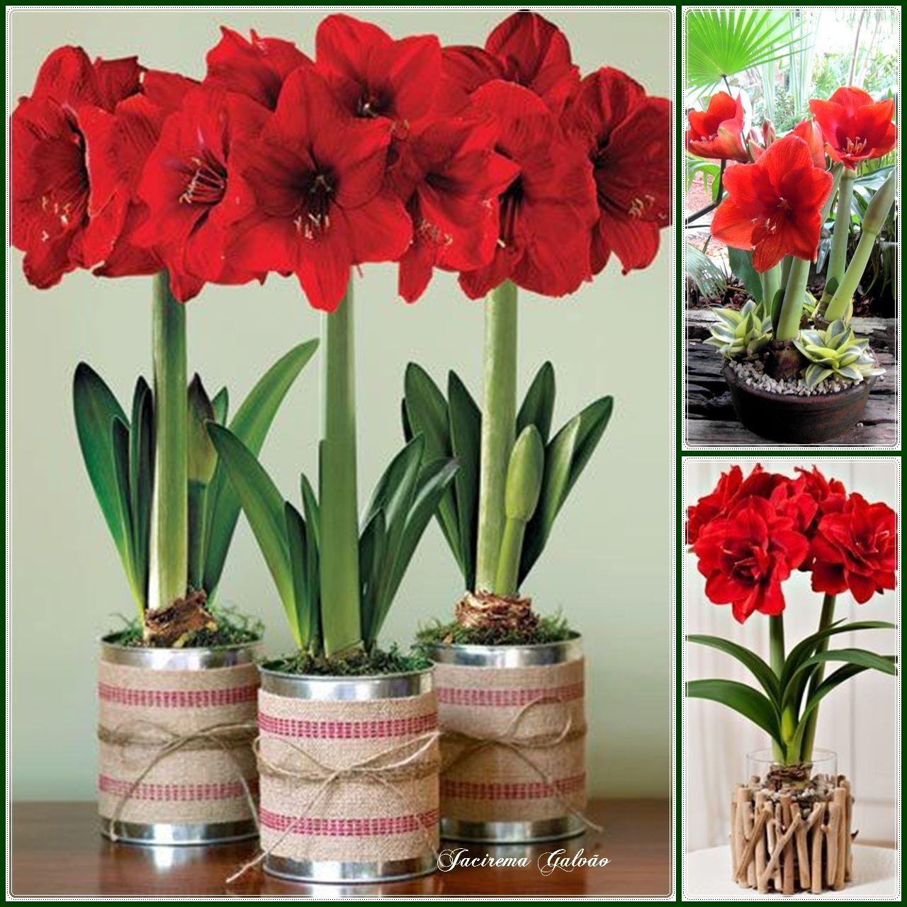 Arranjos amarilis arranjos florais pinterest for Amarilis decoration