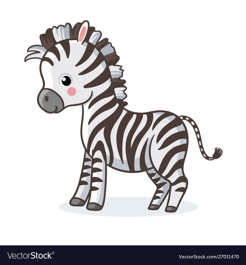 Zebra Is Standing On A White Background And Vector Image Baby Zebra Drawing Zebra Cartoon Cute Animal Drawings
