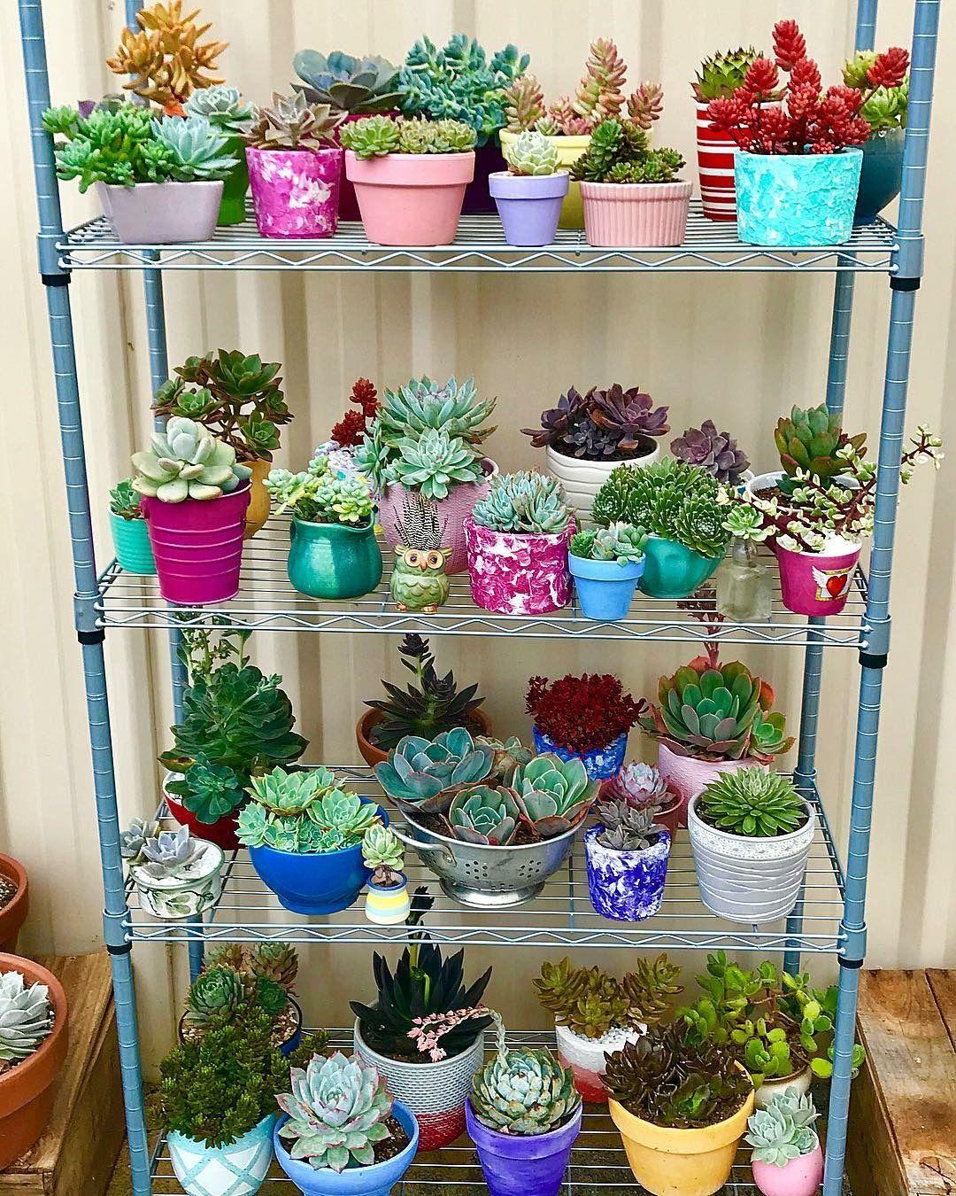Succulent Display, Planting Succulents