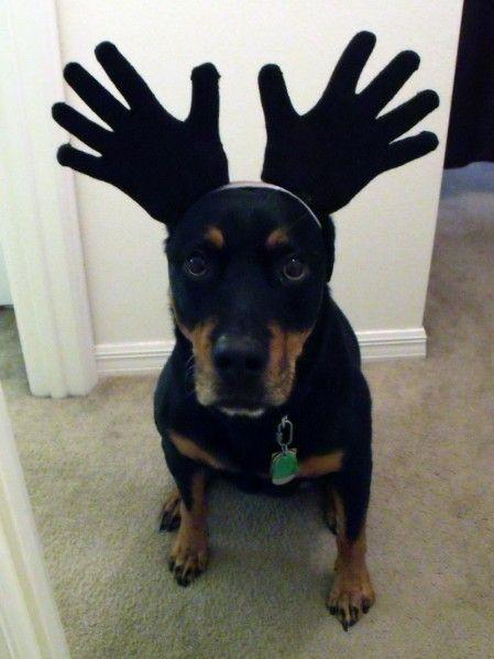 Moose Dog Costume : moose, costume, Moose, Costume, Costumes,, Halloween,, Costumes
