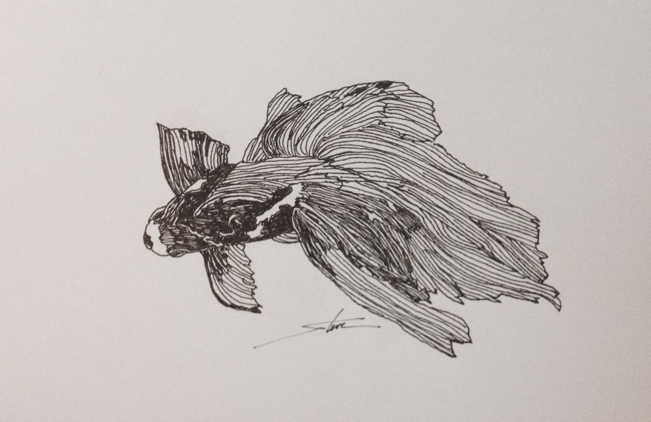 """Theme: Goldfish - pen & ink drawing;  sketch - April 29 - Drawing number for the year #119 - 2015 - see below  '#tf goldfish apr 15' for the  archive of this month.""""line work with a touch of black markings giving it a little lift."""" - Stevewww.thursdayfile.com"""