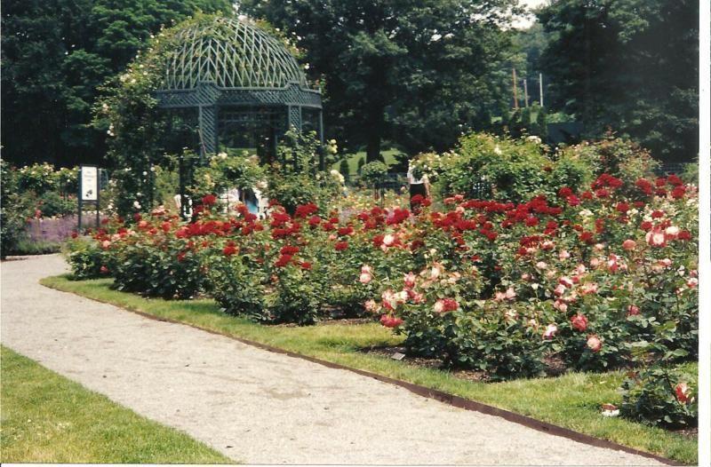 Speechless Sunday Peggy Rockefeller Rose Garden At The New York