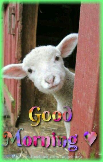 Pin By Hugs On Cumpleanos Y Mensajes Cute Animal Memes Funny Animals Funny Animal Memes