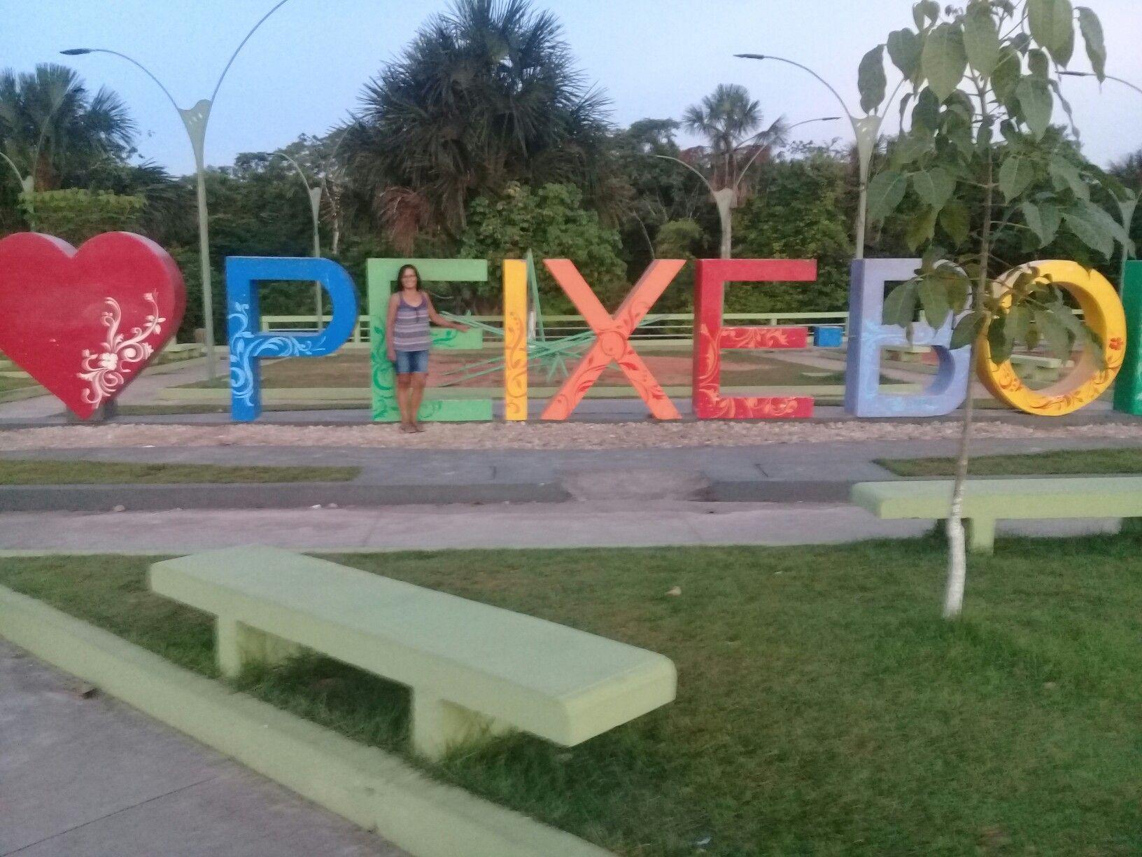 Peixe-Boi Pará fonte: i.pinimg.com