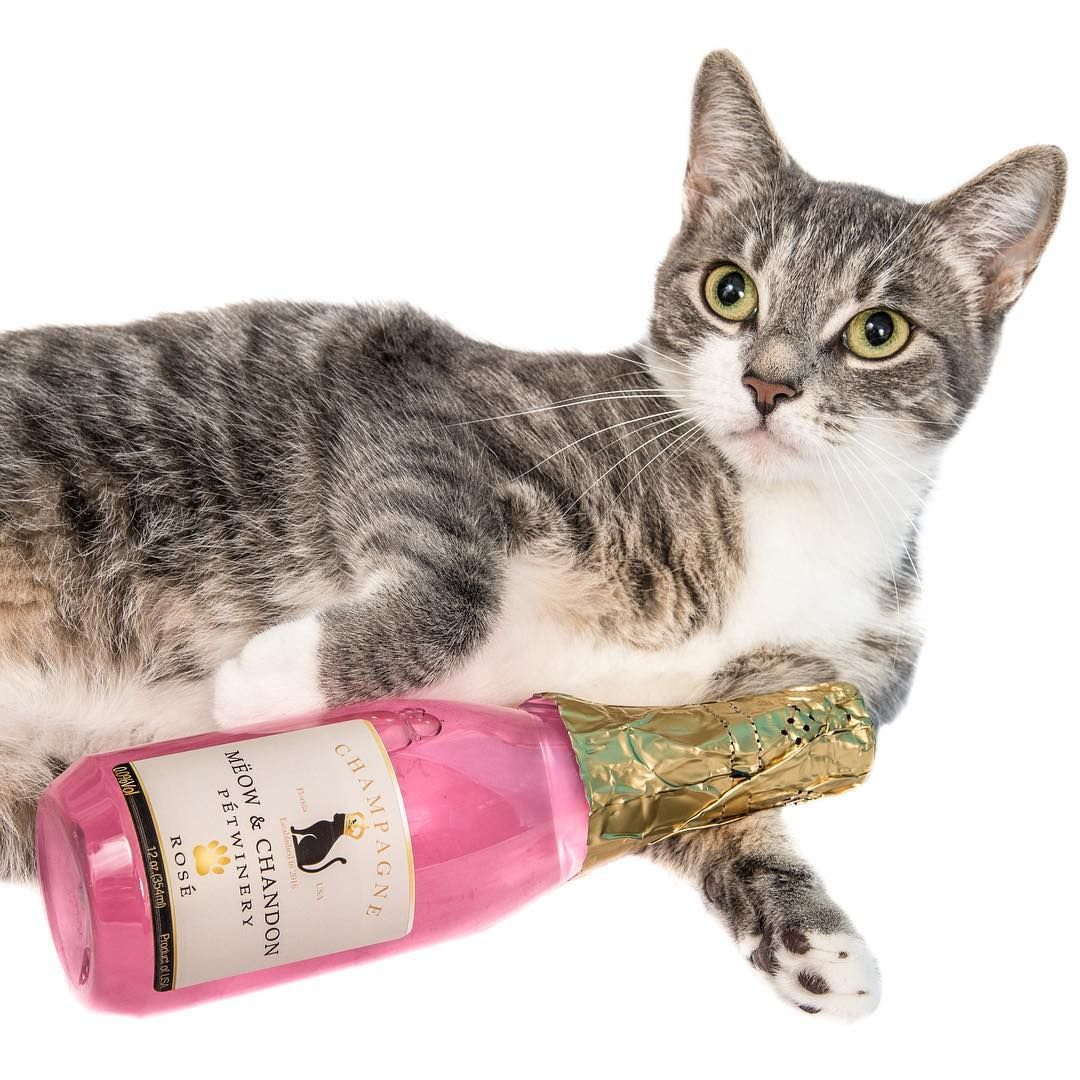 ^ Our Mëow & Chandon is made with organic catnip and