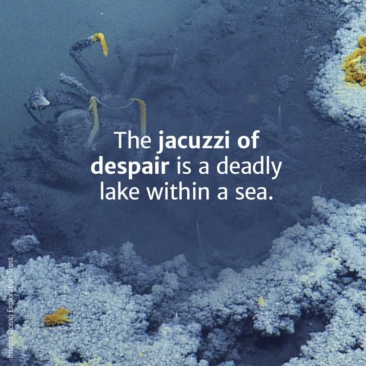 The Jacuzzi Of Despair Is A Deadly Lake Within The Gulf Of Mexico Gulf Of Mexico Despair Ocean Images