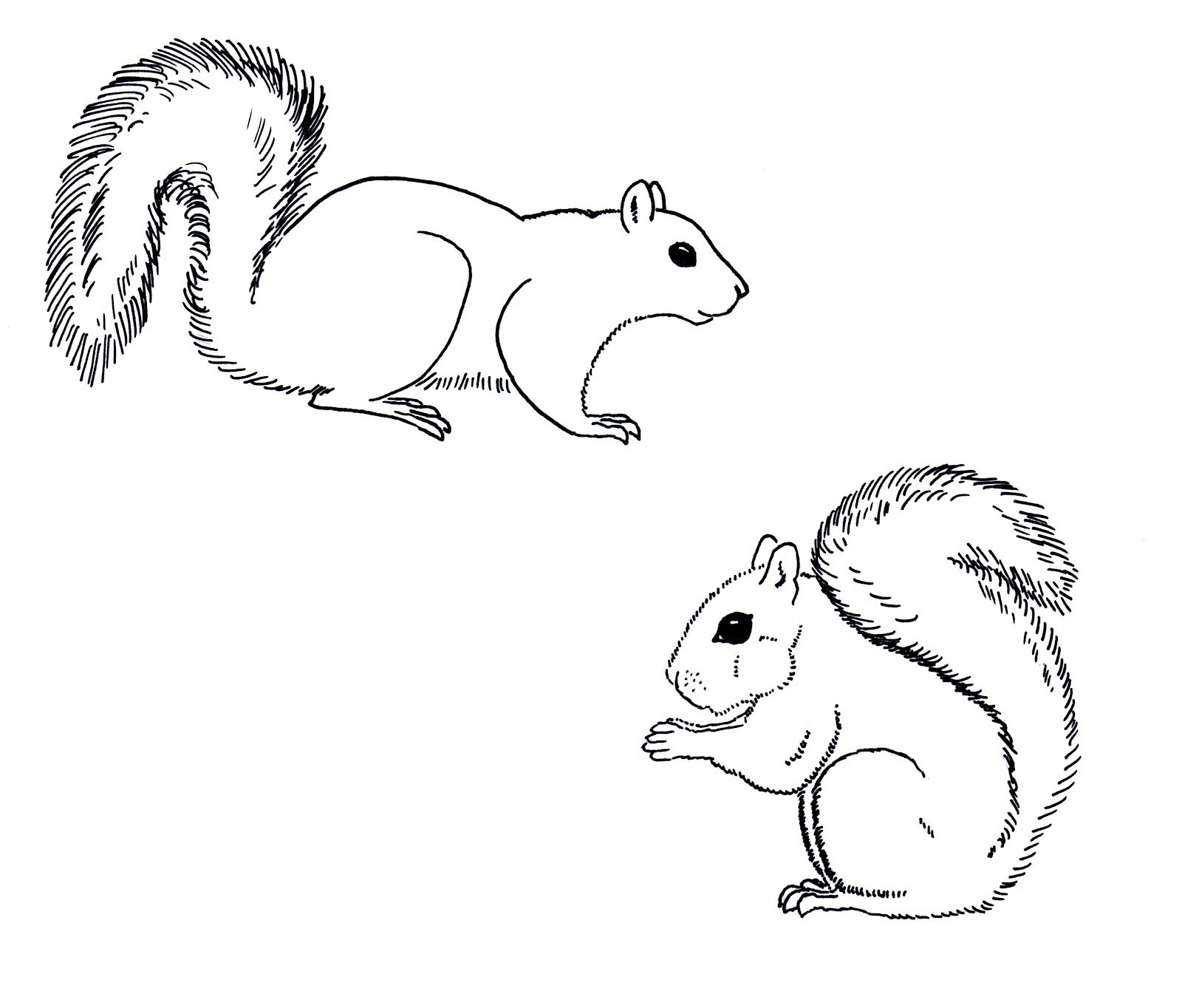 Skippy Squirrel Coloring Pages
