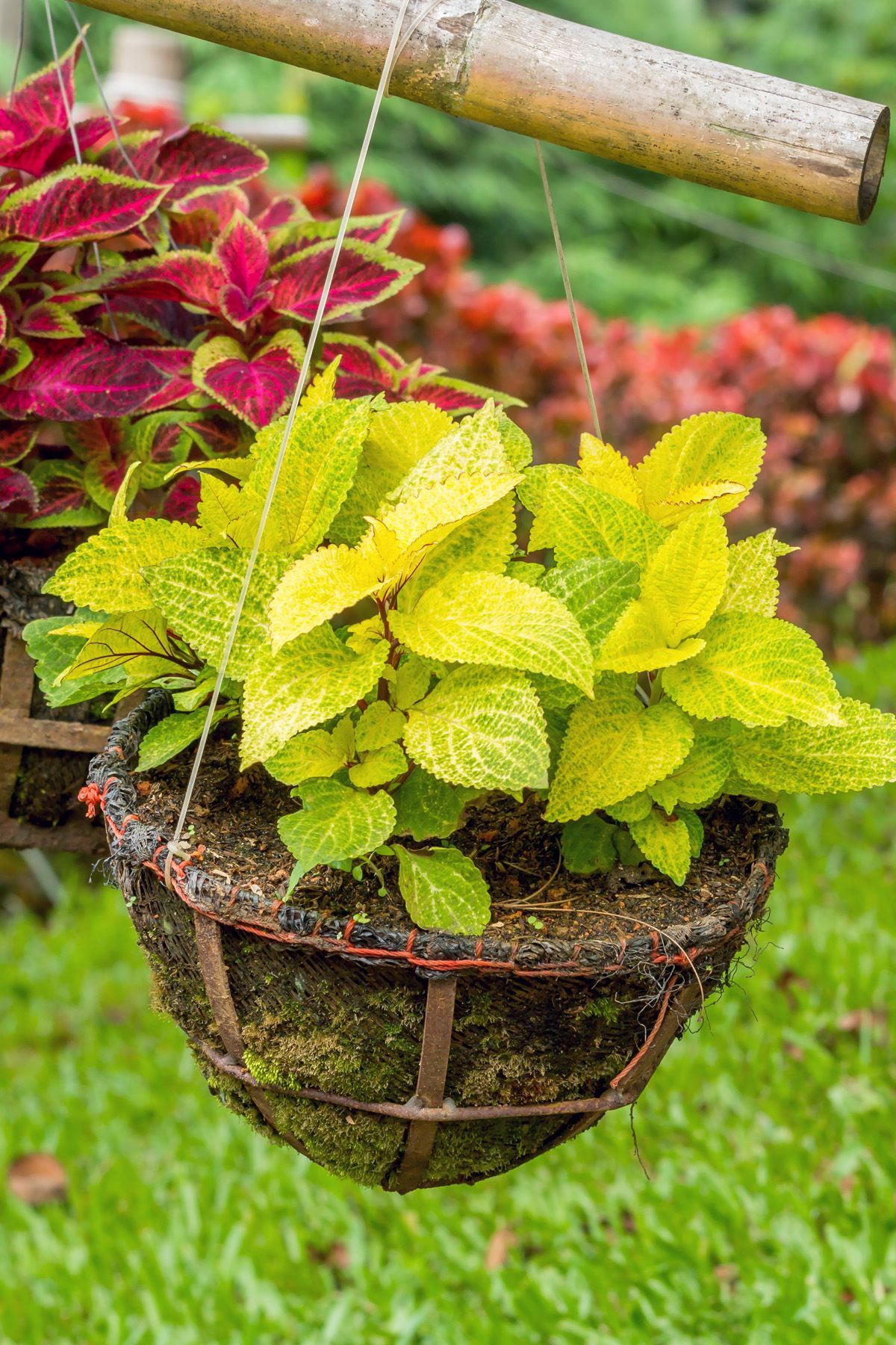 Best 15 Shade Loving Plants That Are Made For A Tree Lined 400 x 300