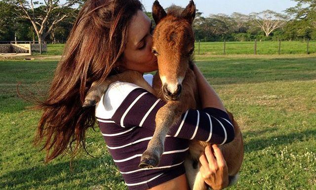 Esta cuenta de Instagram hará que te enamores de los minihorses