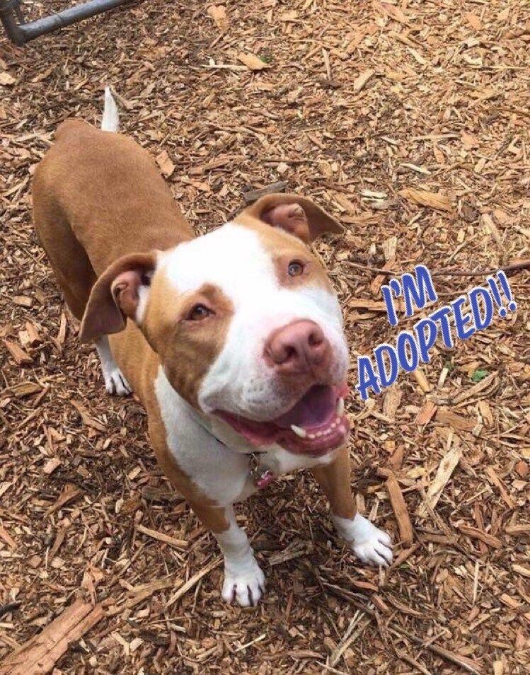 Shelter Spotlight Happy Tails Animal Shelter Shirt Dog Adoption Animals