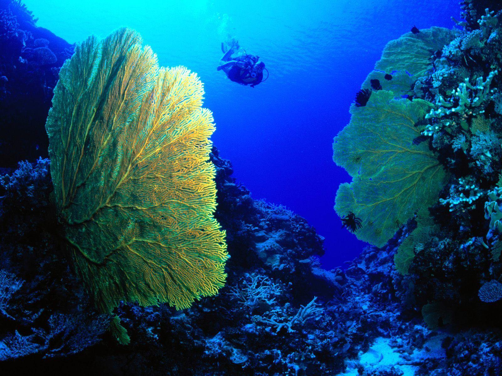 ocean life pics | Index of /extra-wallpapers/ocean-life-3