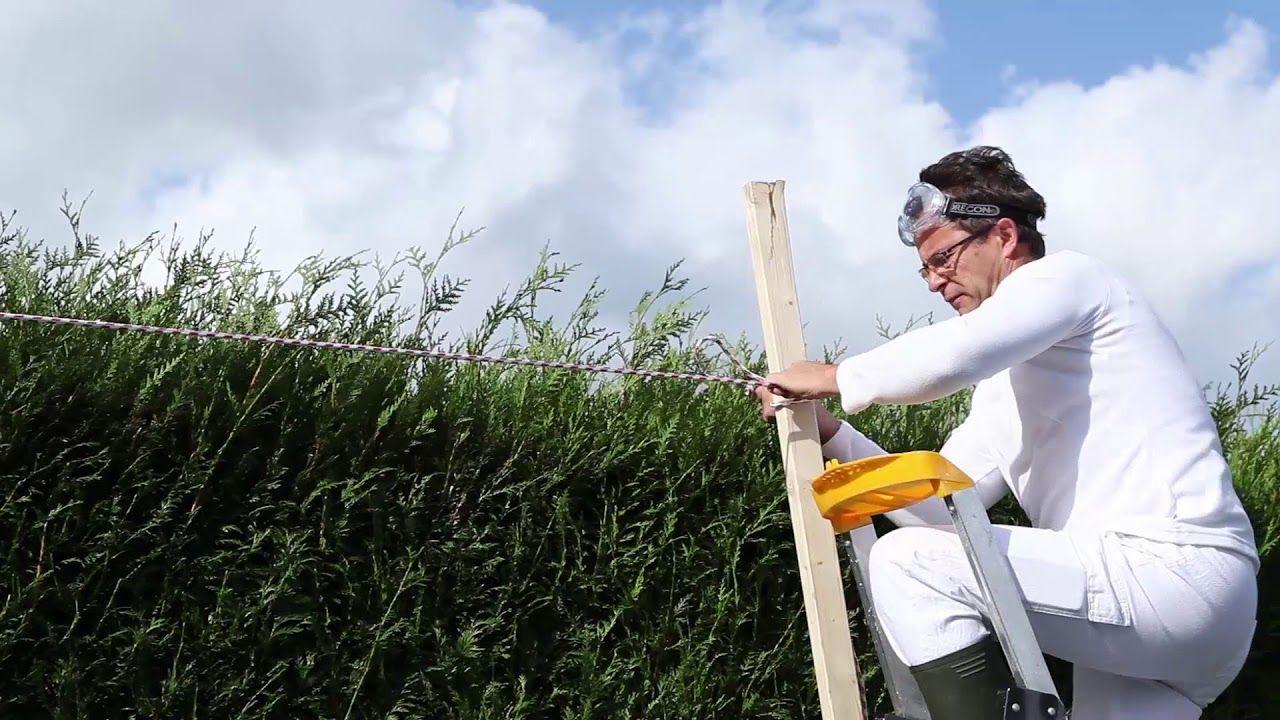 Come Potare Le Siepi Tutorial Leroy Merlin Garden Idee Siepi