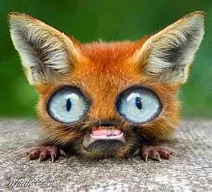 Weird Yet Cute Animals 6