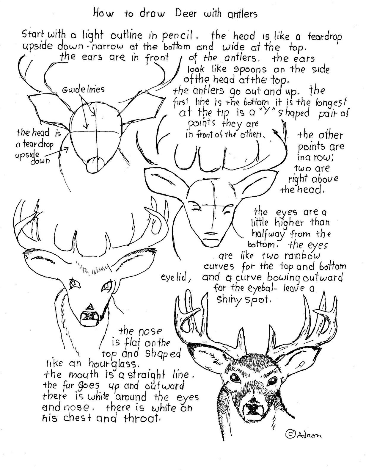 How To Draw A Buck Deer With Antlers