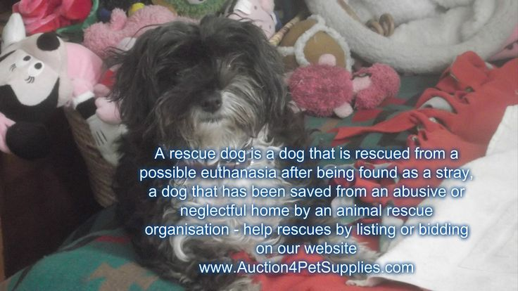 our new blog is out about rescues Animal rescue, Rescue