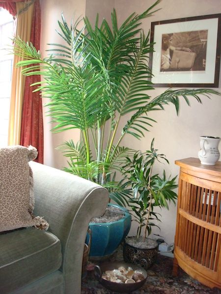 Fake Plants Living Room