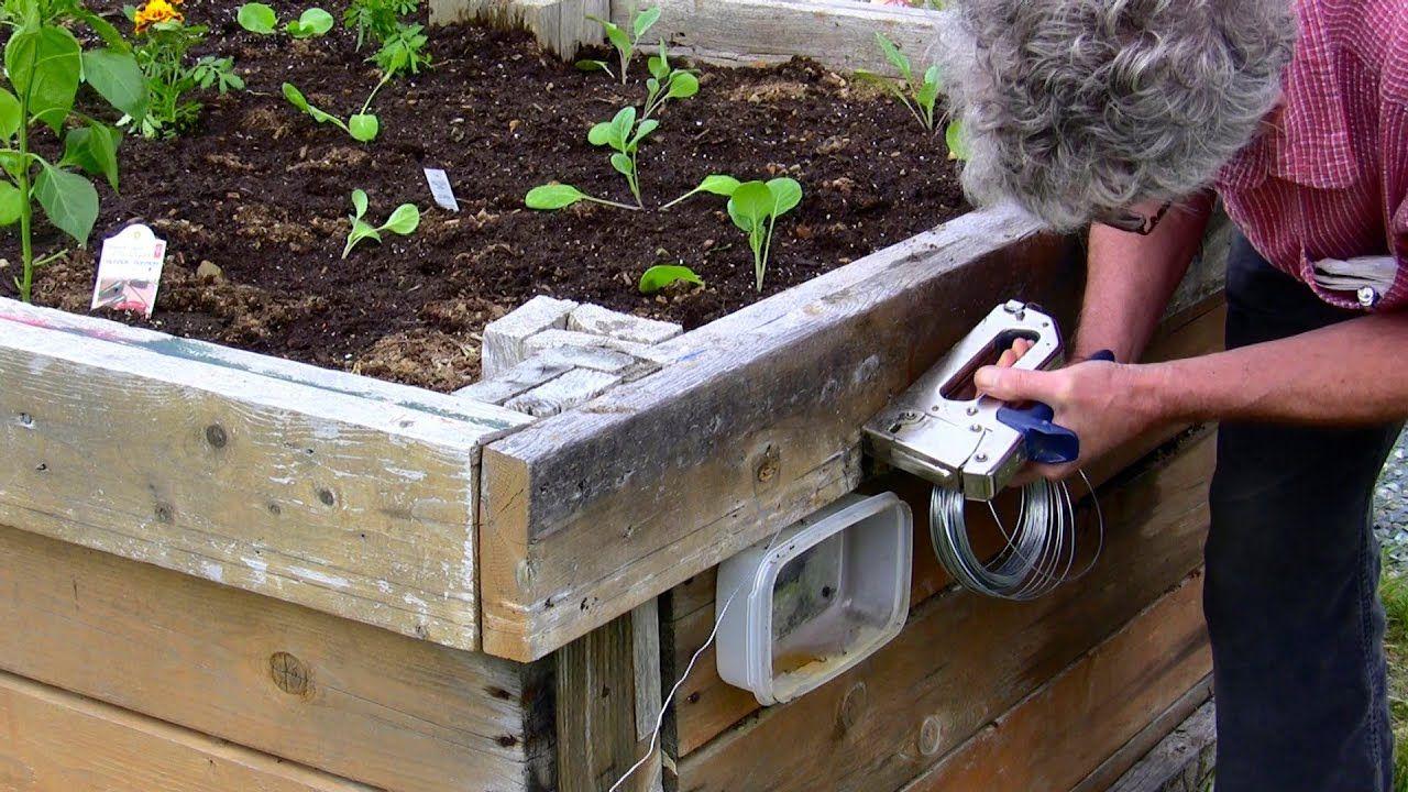 Slug Control 100 And Most Humane Slugs Organic Gardening Pest