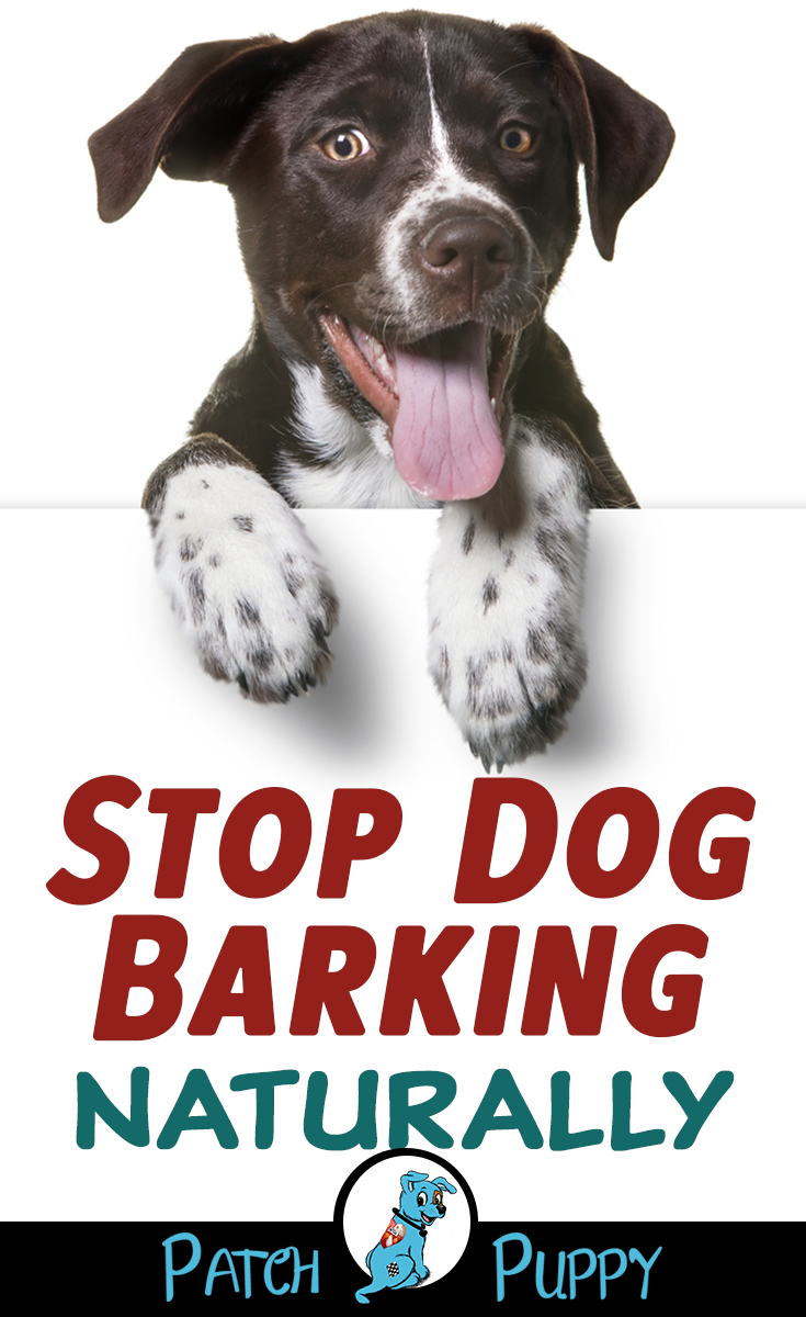 3 Steps To Stop Dog Barking Naturally Video Case Study Stop