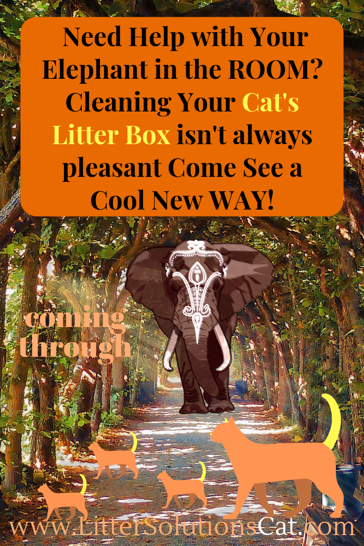 Elephant In Room That Needs To Be >> Cleaning Your Cat S Litter Box Isn T Just Yuck It Has To Be Done