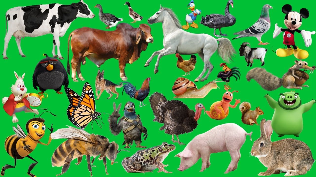 Farm Animals Sounds Video For Kids Nursery Rhymes Farmees Old