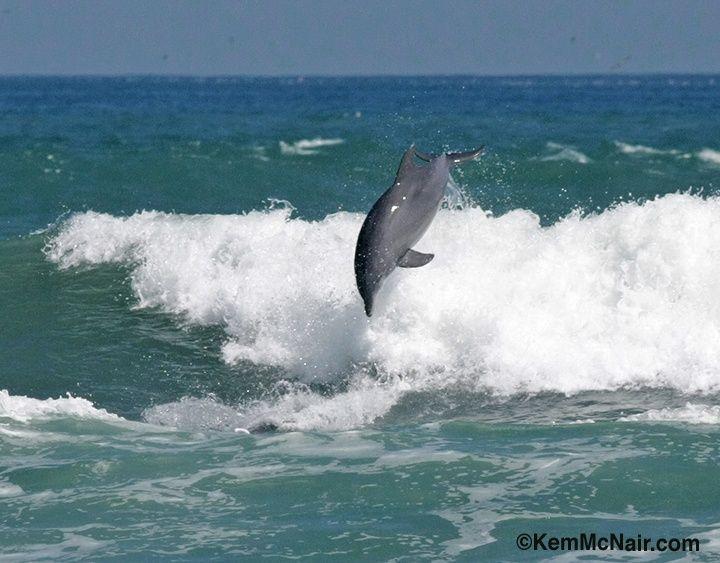 New Smyrna Beach Fl Surfing