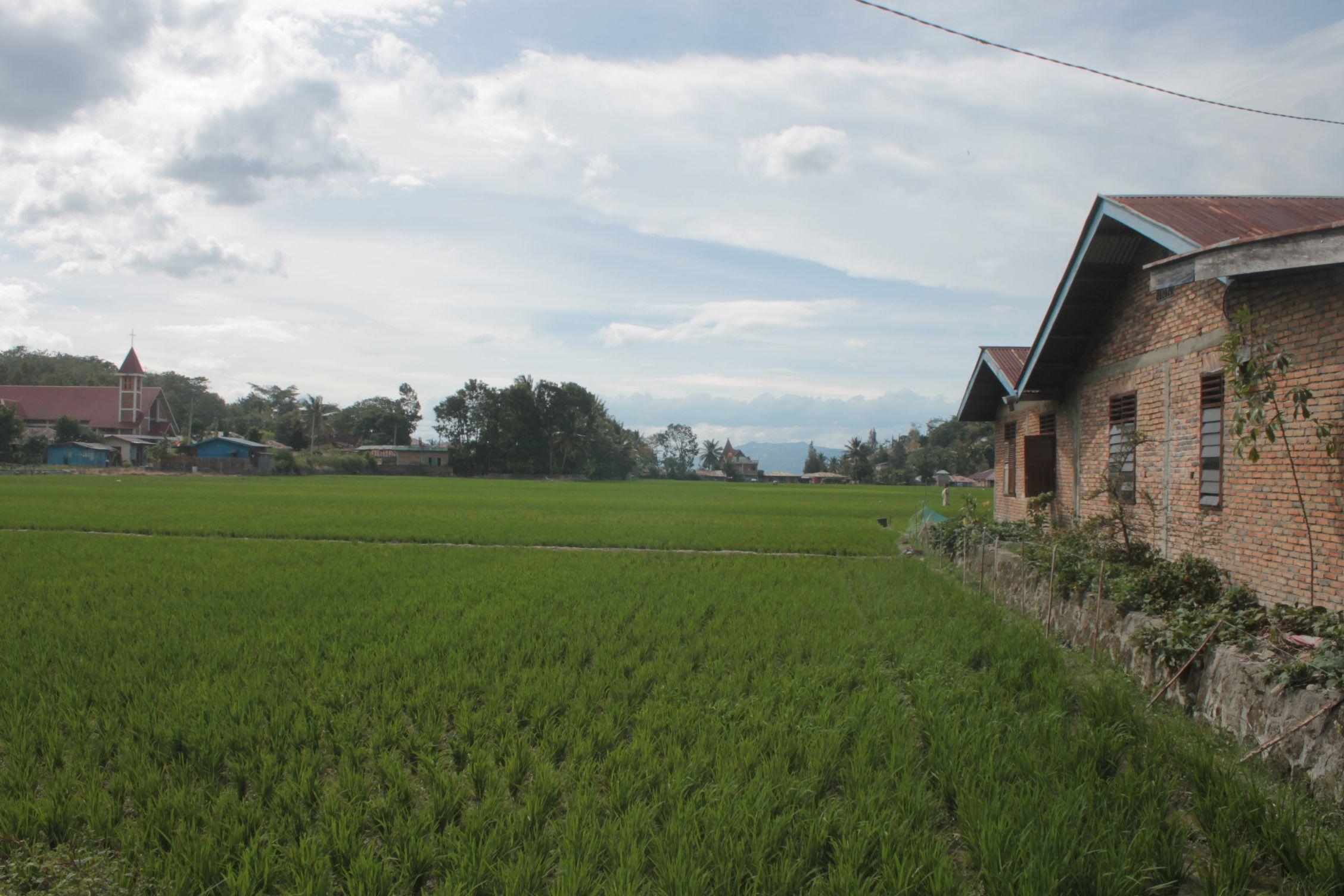 Campos de arroz en Tuk-Tuk