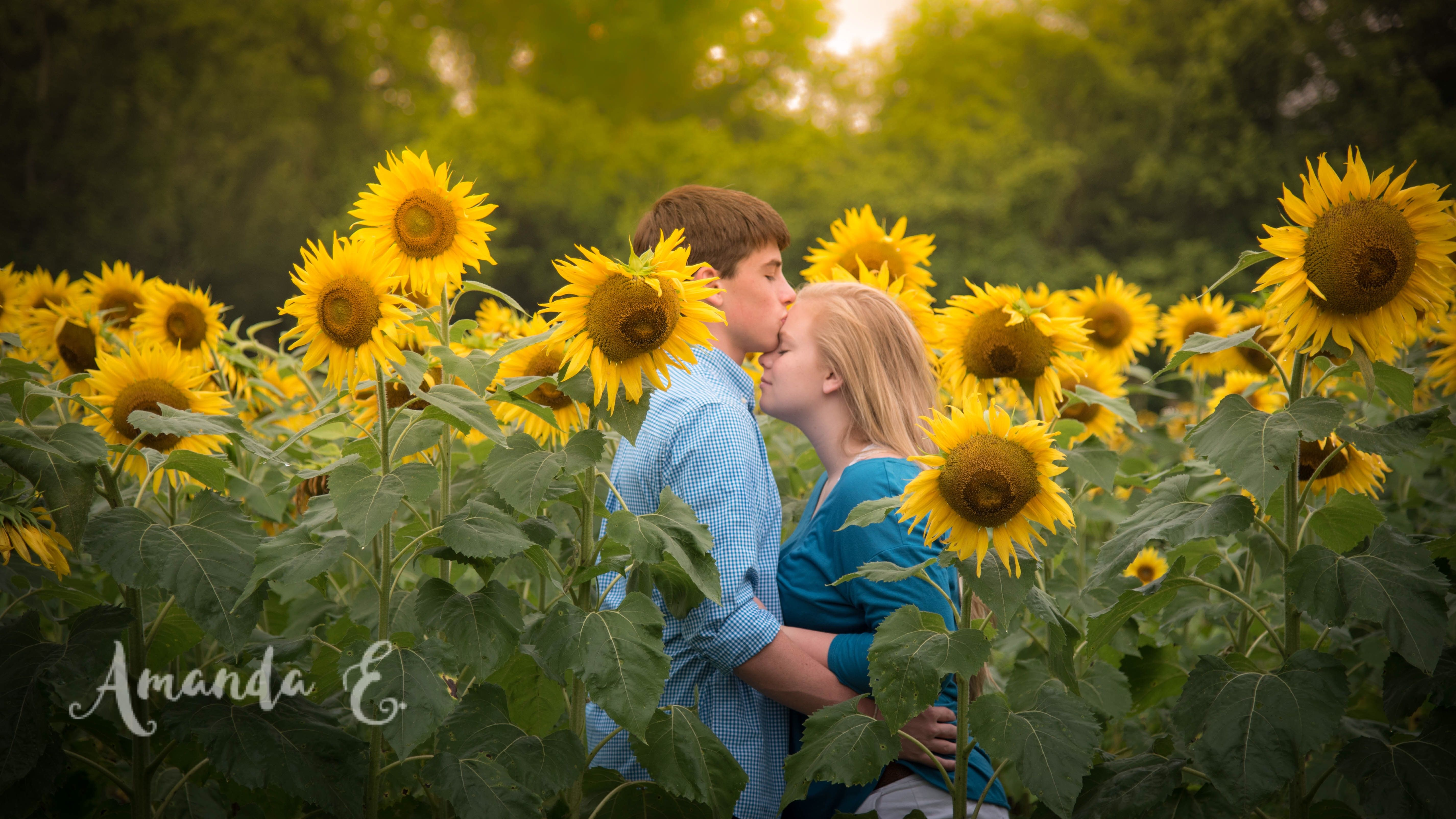 Sunflower Field Photography Engagement Photo Shoot In Sunflower