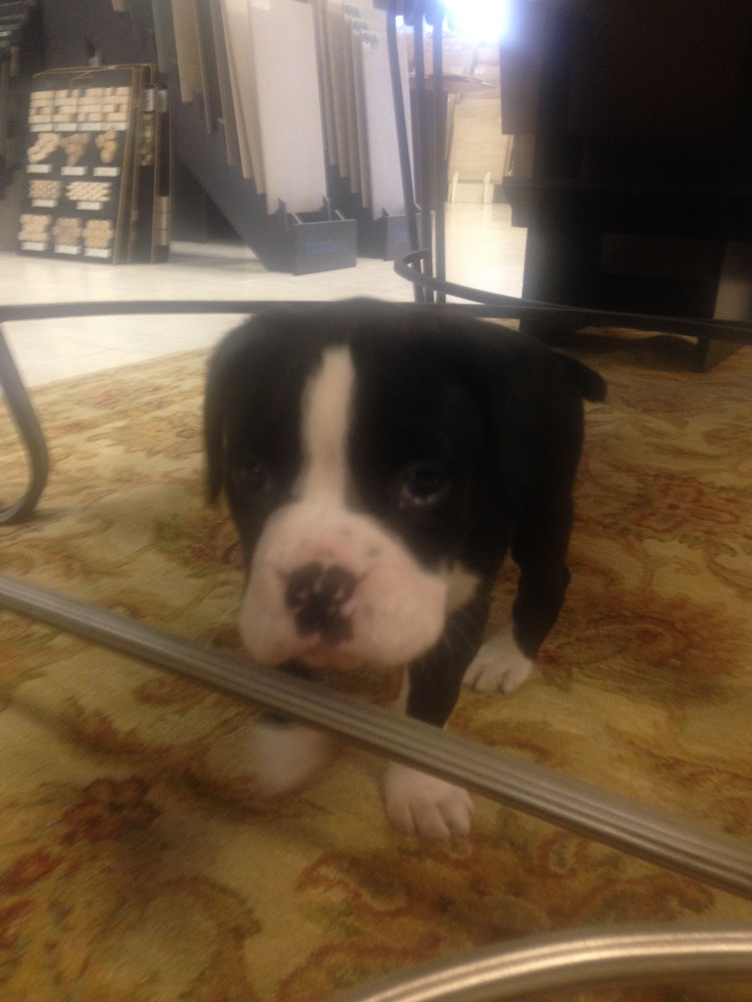 Floorco's new team member is excited to meet our customers and show  you around the mandeville showroom!