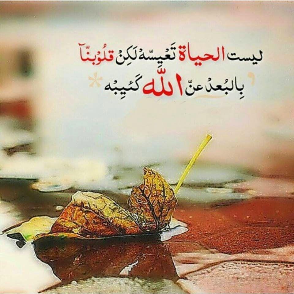 ثقافة كافيه حكم وخواطر في قمة الروعة Cool Words Islamic Inspirational Quotes Arabic Quotes