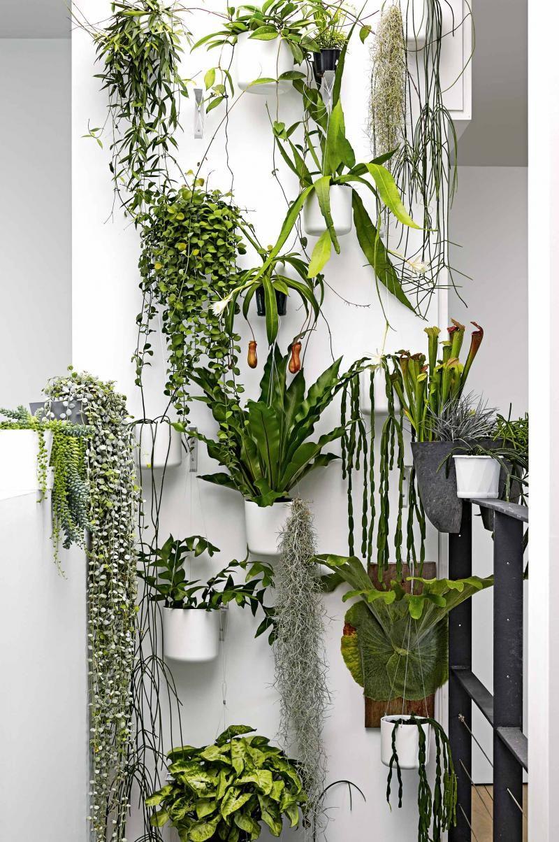 green wall sept15 green wall sept15 Inspiration Plants