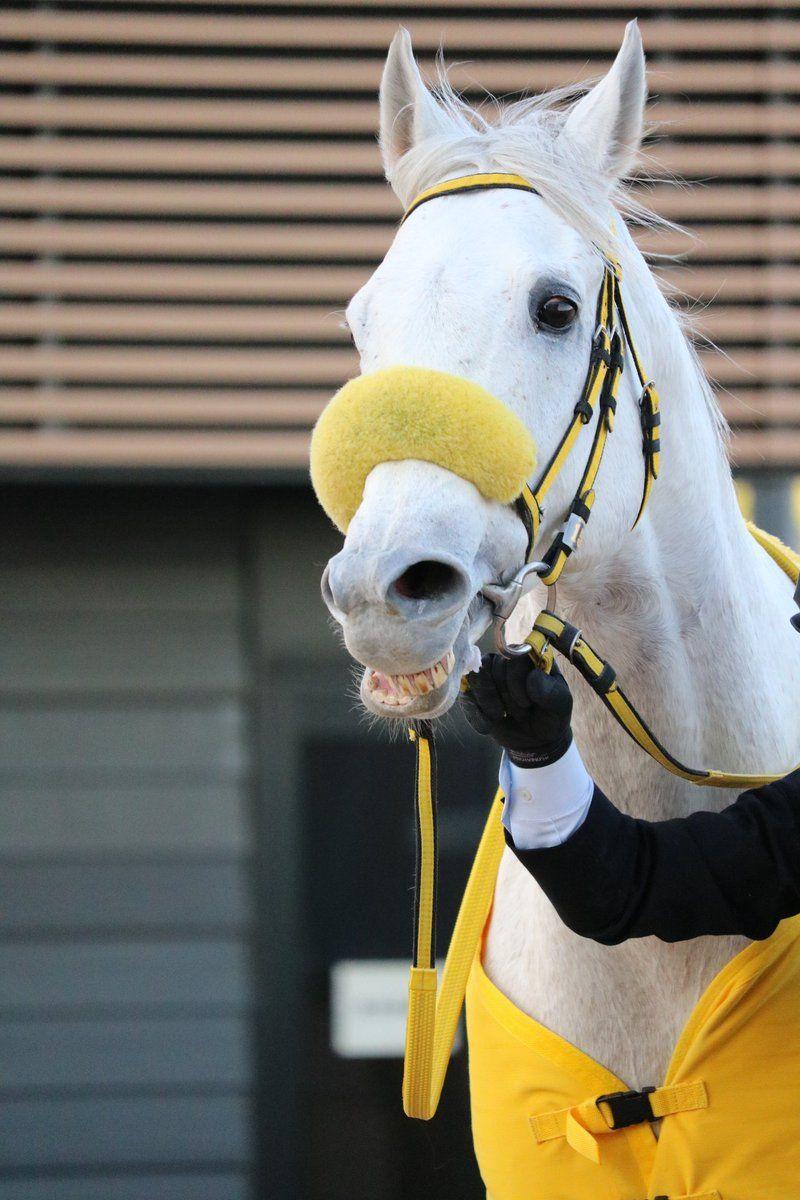 いくえ On かわいい馬美しい馬馬の顔