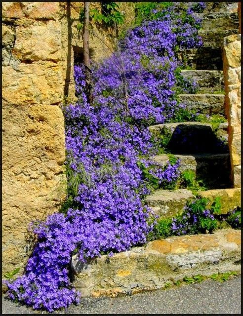 Old Stone Stairs with blue flowers.