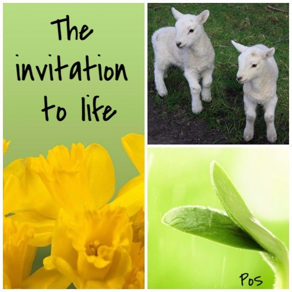 Spring is an invitation to life