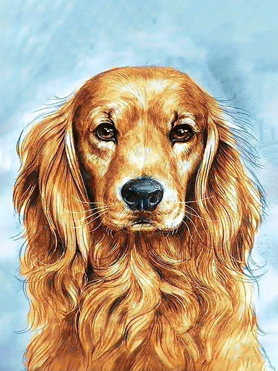 рисунок собака с разными пятнами: 8 тыс изображений ...