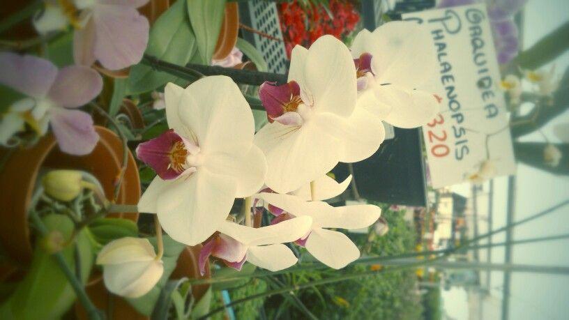 Orquídeas¡¡