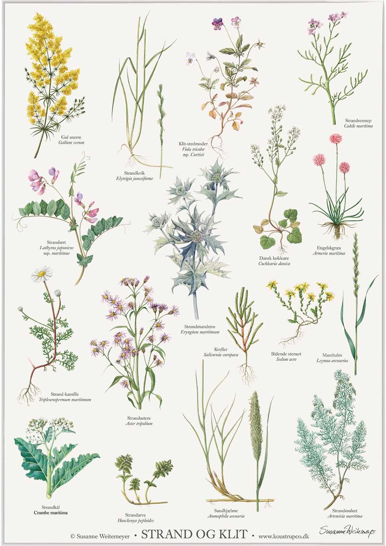 spiselige planter ved stranden