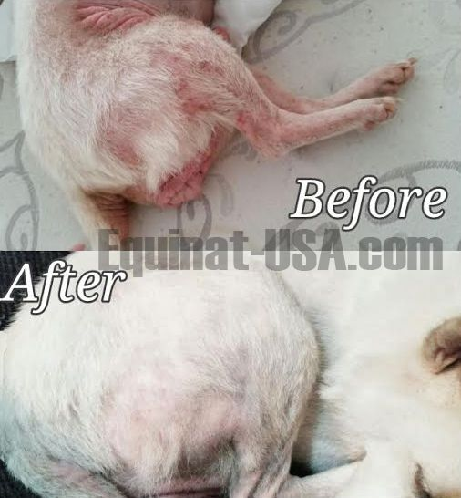 Dermacton Reviews Dog Skin Allergies Dog Itchy Skin Remedy Dog
