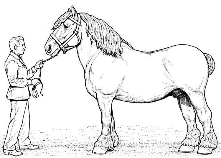 man with horse | Horses | Pinterest