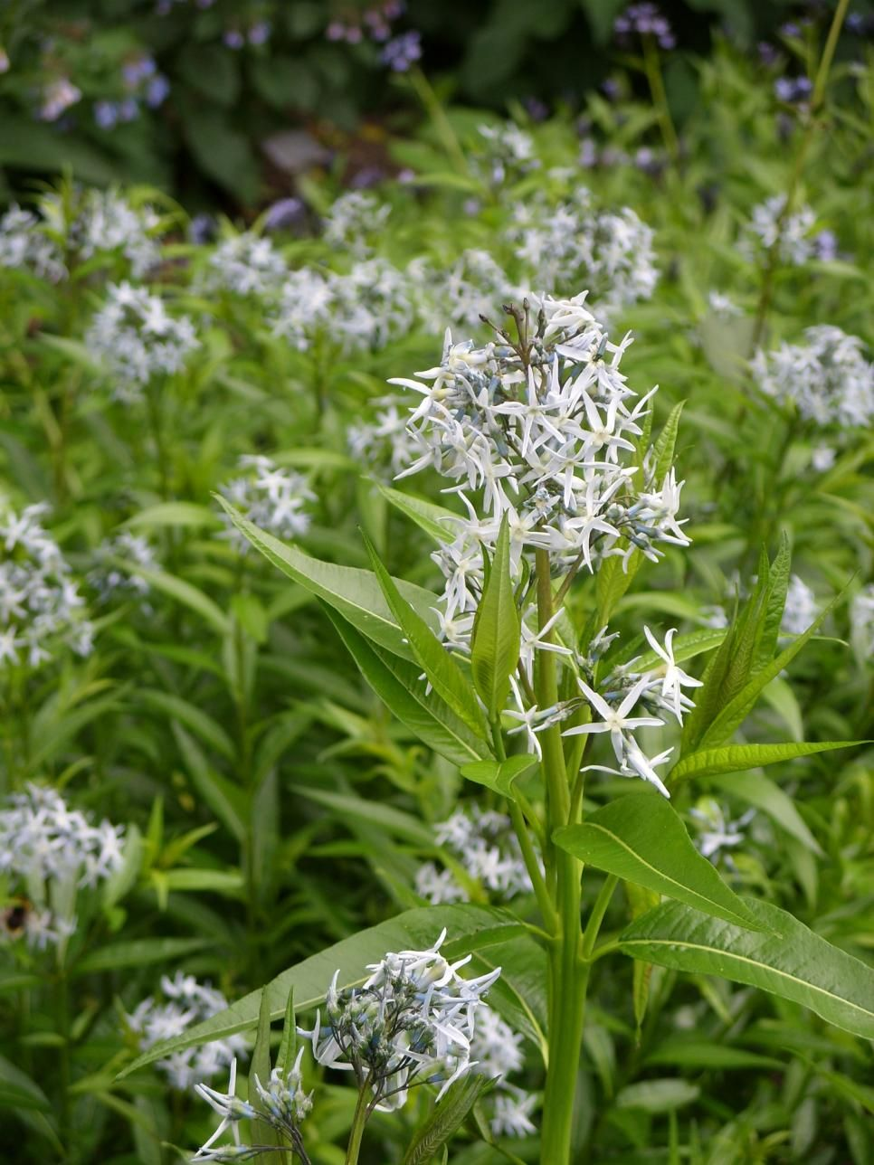Perennial Plants For Winter Spring Perennial Flowers Bold