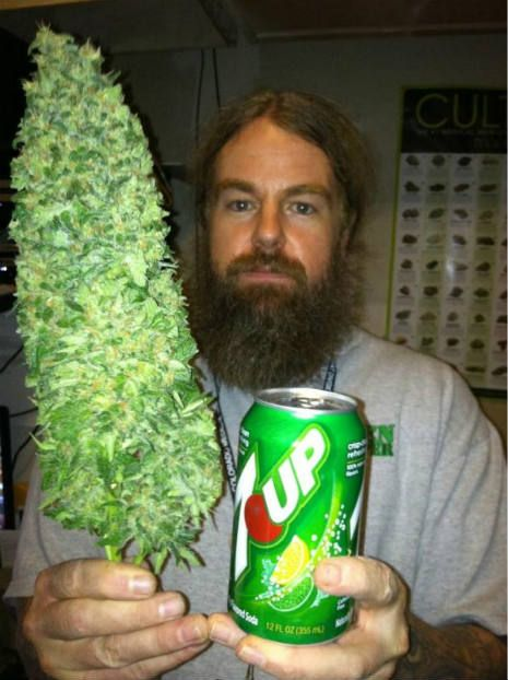 The biggest bud EVER | For the Love of MaryJane | Cannabis ...