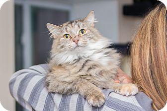 Pin On Urgent Pets