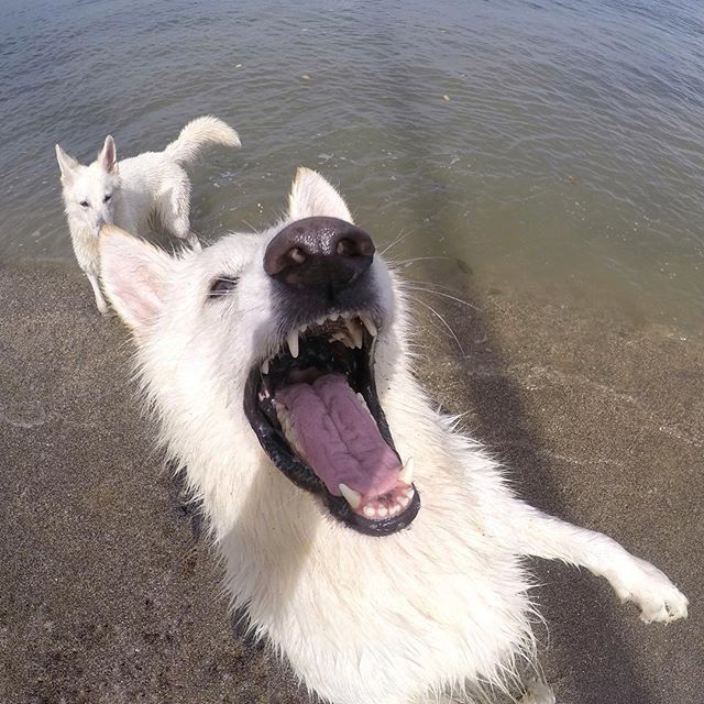 Must fetch that stick.. But first, let me take a selfie😛📸 #selfiesunday#goof