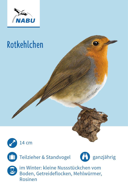 Das Rotkehlchen Vogel Im Garten Rotkehlchen Einheimische Vogel