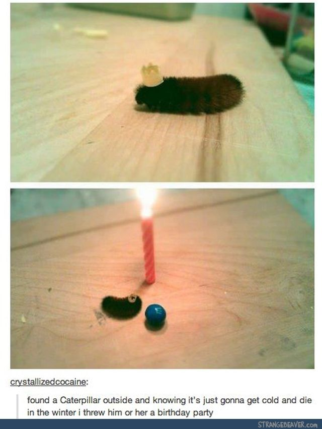 how to clean a caterpillar shoes youtube memes funny birthday
